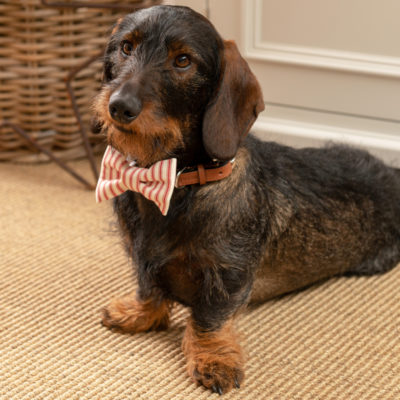 mutts-and-hounds-Bow-Tie-Red-Ticking-Stripe