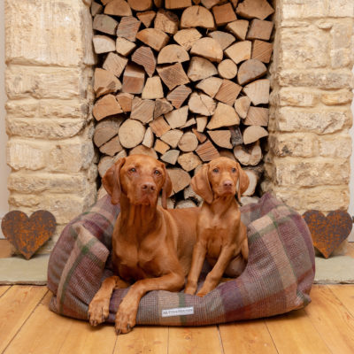 mutts-and-hounds-Boxy-Bed-Grape