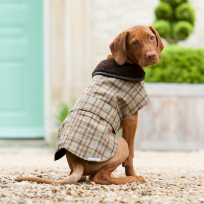 mutts-and-hounds-Coat-Tweed-Balmoral