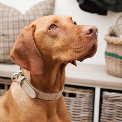 mutts-and-hounds-Collar-Oatmeal