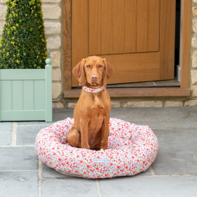 Donut-Posie-mutts-and-hounds