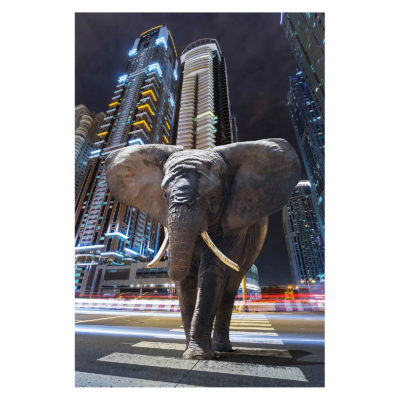 elephant-in-city-aluart-mondiart-wall-art