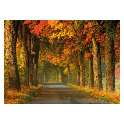 winding-country-road-autumn-wall-textiles-mondiart