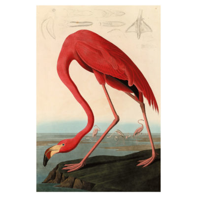 aluart-American-Red-Flamingo-animals-mondiart
