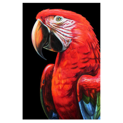 aluart-colorful-parrot-portrait-animals-mondiart