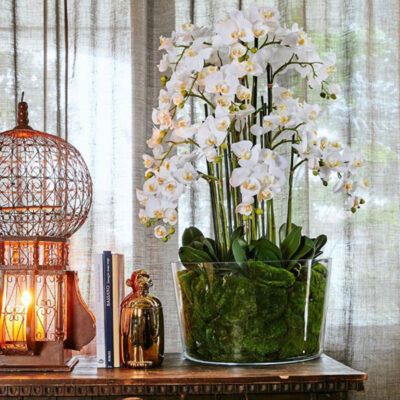 artificial white Orchid H100cm by edg