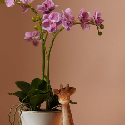 artificial pink orchid with vase by EDG