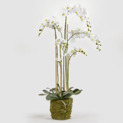 artificial white orchid duke by EDG
