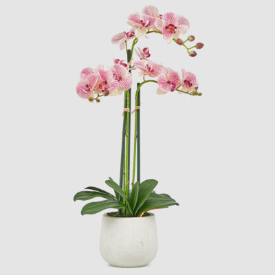 pink orchid with vase by EDG