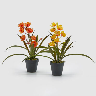 aertificila Orchid se of 2 yellow and red by EDG