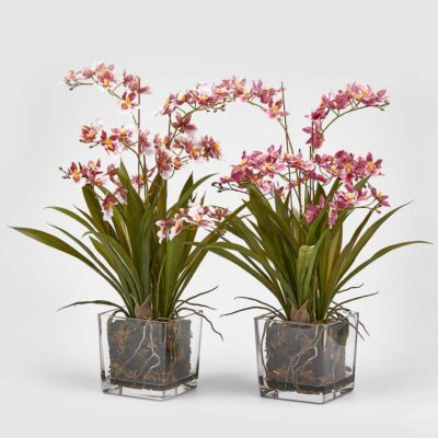 artificial Orchidia Oncid set of 2 pink by EDG