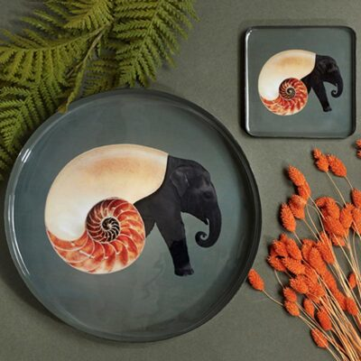 Shellelephant tray by Gangzai