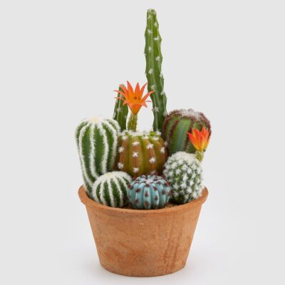 artificial cactus mix in terracotta pot by EDG