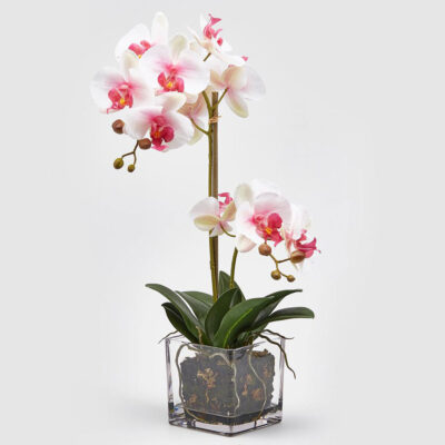 artificial orchid with glass vase by EDG