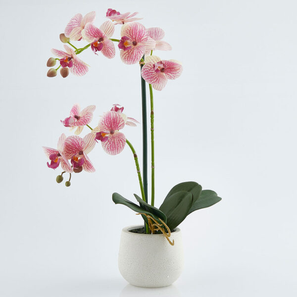 EDG artificial pink orchid with white ceramic vase