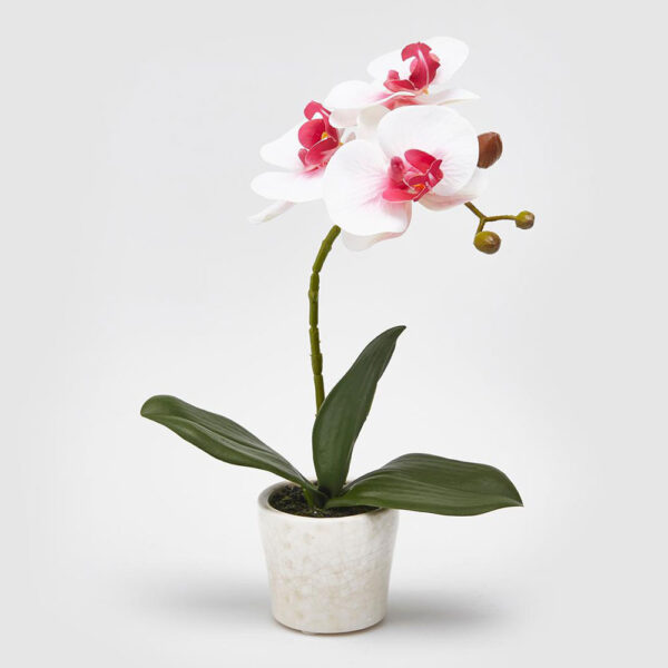 artificial moth orchid pink