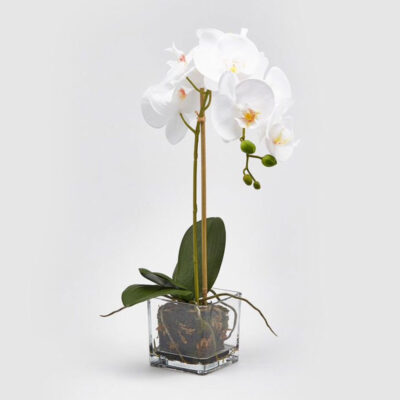white artificial orchid with clear vase
