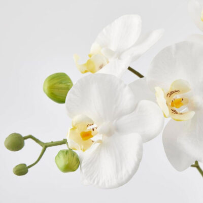 artificial white orchid in pot