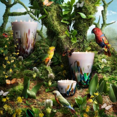 Rainforest candle Baobab Collection