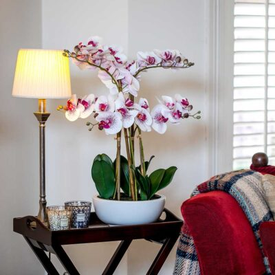 faux white pink orchid with vase